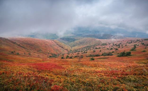Schöner herbst in der ukraine. berghügel bedeckten rote teppichblätter