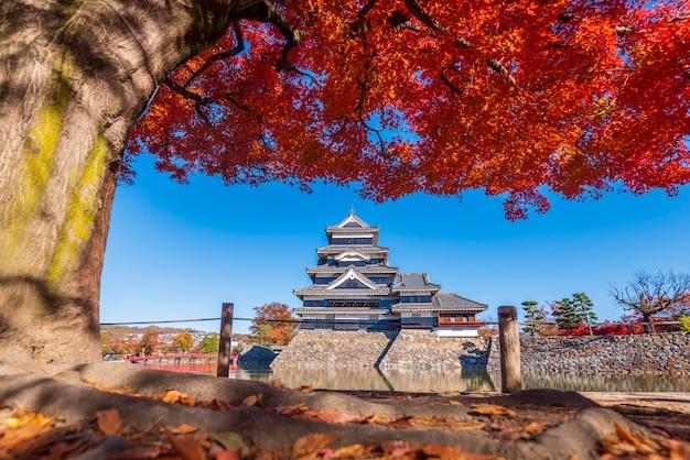 Schöner herbst von matsumo castle, nagano, japan