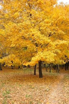 Schöner herbstbaum, herbst