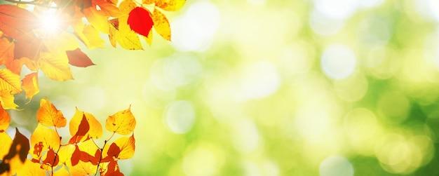 Schöner herbsthintergrund mit gelben und roten blättern.