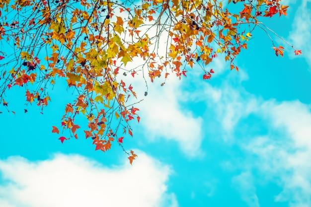 Schöner herbstlaub und himmelhintergrund in der herbstsaison, bunter ahornlaubbaum im herbstpark, herbstbäume verlässt im weinlesefarbton.