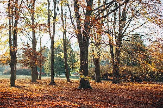 Schöner herbstpark mit den gelben bäumen bei sonnigem wetter