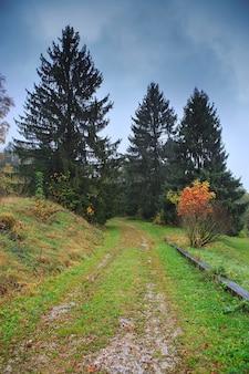 Schöner herbstwald mit verschiedenen bäumen.