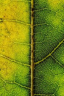 Schöner hintergrund eines exotischen baumblattes mit interessanten texturen