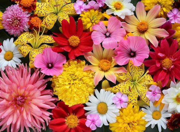 Schöner hintergrund von gelben und rosa blumen des verschiedenen gartens