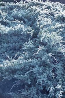Schöner hintergrund von nadelbäumen