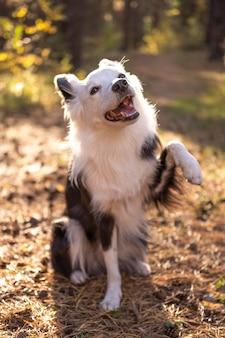 Schöner hund, der seine pfote gibt