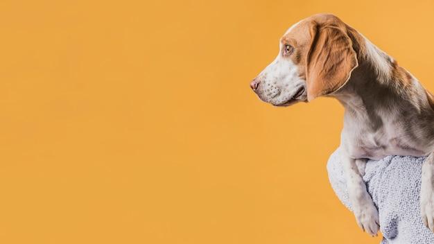 Schöner hund, der weg mit kopienraum schaut