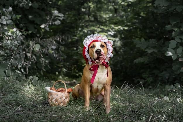 Schöner hund im halloween-märchenkostüm der kleinen roten kappe im wald. porträt des niedlichen welpen, der in der roten reitenden haubenkappe und im korb mit gebäck im grünen naturhintergrund aufwirft
