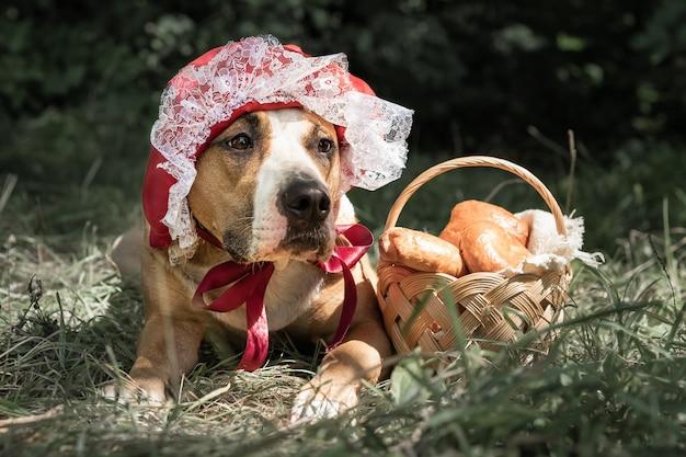 Schöner hund im halloween-märchenkostüm der kleinen roten kappe. porträt des niedlichen welpen, der in der roten reitenden haubenkappe und im korb mit gebäck im grünen waldhintergrund aufwirft