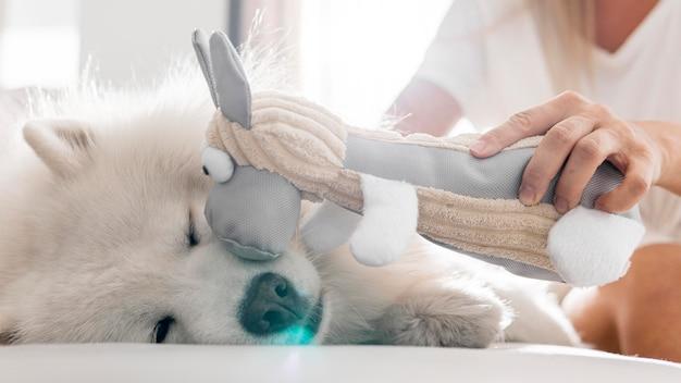 Schöner hund und frauen im haus