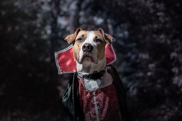 Schöner hund verkleidet als vampir im dunklen mondhellen wald. netter staffordshire terrier welpe im halloween-kostüm des gruseligen vampirs im wald, in zurückhaltendem schuss erschossen