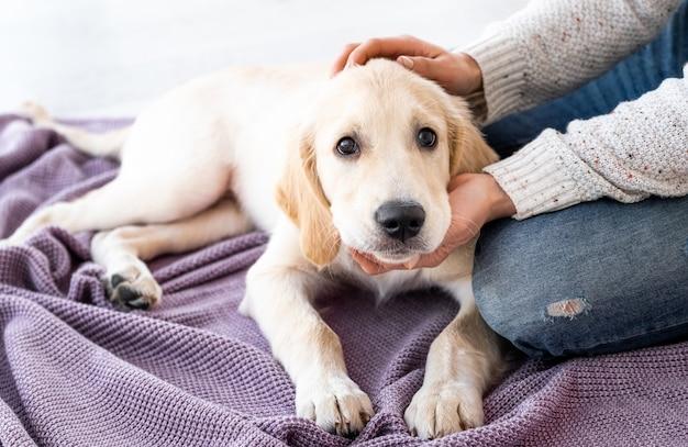 Schöner junger hund zu hause