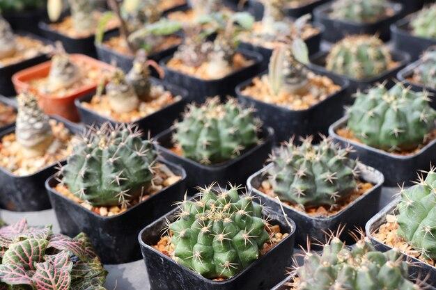 Schöner kaktus für verkauf