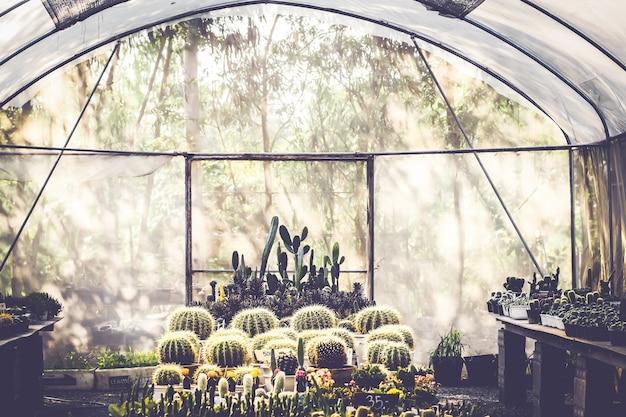 Schöner kaktus in der zimmerpflanze für den abstrakten grünen hausinnenhintergrund des kindergartens