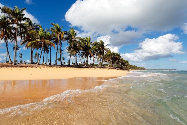 Schöner karibischer strand mit palmen und himmel
