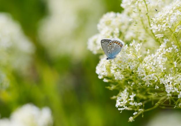 Schöner kleiner blauer schmetterling