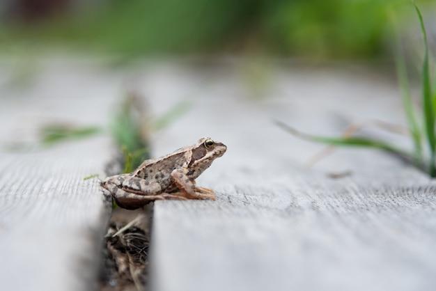 Schöner kleiner brauner frosch sitzt im gras und auf dem holz in einem hellen sommergarten.