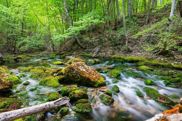 Schöner kleiner fluss im grünen wald