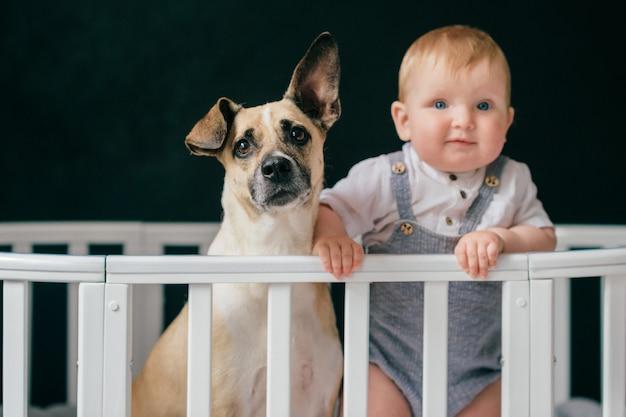 Schöner kleiner junge mit lustigem hund, der zusammen in der krippe steht