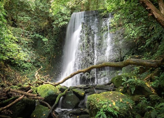 Schöner kleiner wasserfall, umgeben von waldaufnahmen von matai falls catlins new zealand new
