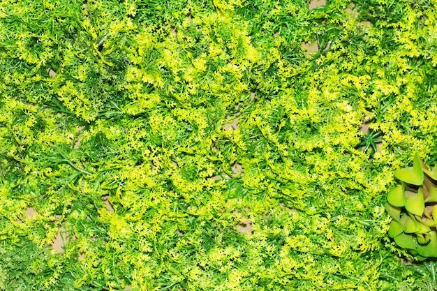 Schöner künstlicher zierpflanzenhintergrund