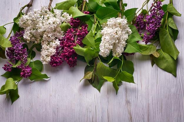 Schöner lila flieder auf hölzernem weißem hintergrund