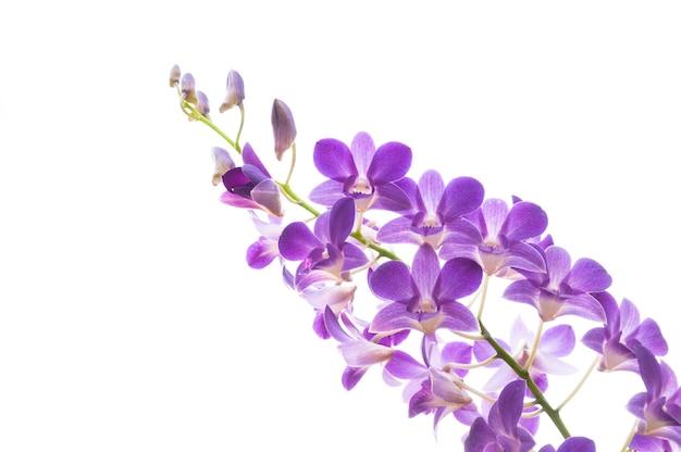 Schöner lila orchideenblumenzweig
