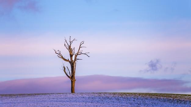 Schöner lila wintersonnenuntergang