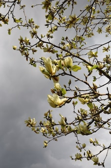 Schöner magnolienbaum in einem garten während des tages