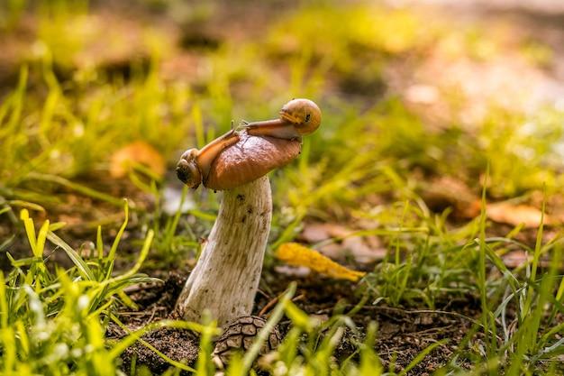 Schöner mashroom im gras mit schnecke auf huthintergrundbeleuchtung makroaufnahme