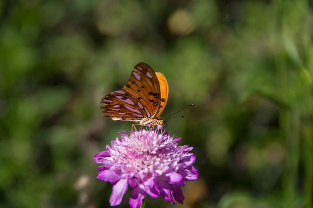 Schöner monarchfalter, der über lila blumen und disteln flattert