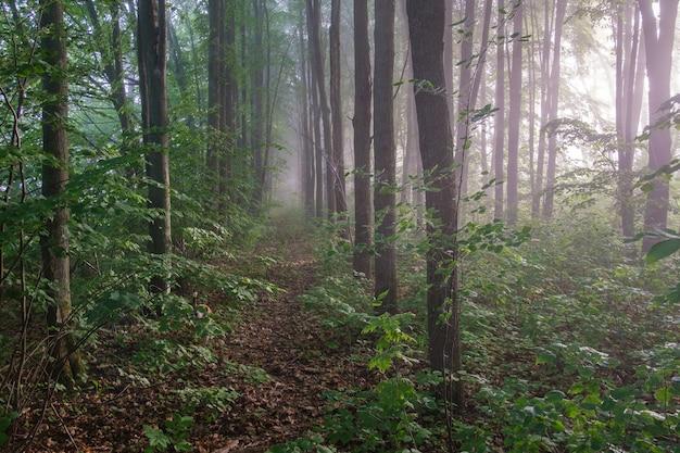 Schöner morgen park im nebel und ein beagle-hund auf einem spaziergang