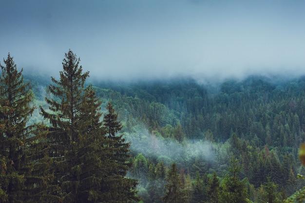 Schöner nationalpark mit nadelbäumen und bergen