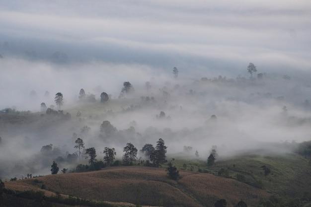 Schöner nebliger sonnenaufgangnebel bedeckte gebirgswaldlandschaftsdraufsicht / gebirgszüge mit baum an der landschaft /