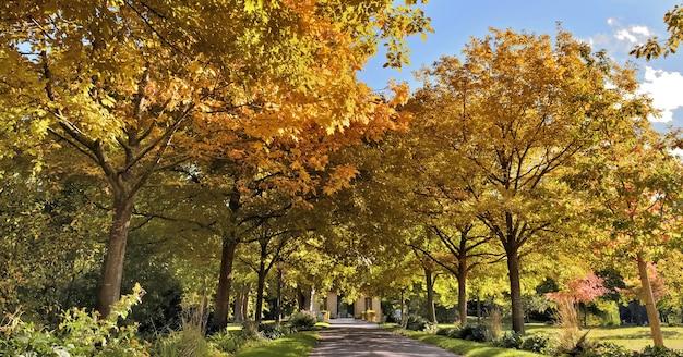 Schöner öffentlicher park, umgeben von buntem laub der bäume im herbst, grün und gelb