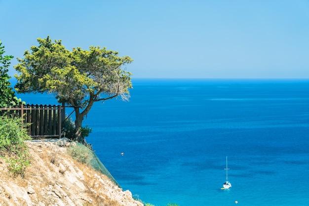 Schöner olivenbaum auf einer klippe über einem strahlend blauen meer mit einem boot. in der nähe von cape greco auf der insel zypern, mittelmeer.
