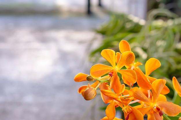 Schöner orange orchideen-hintergrund verwischte blätter in einem sommergarten.