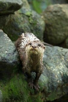 Schöner otter, der im zoo steht