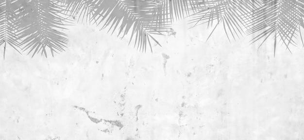 Schöner palmblattschatten auf schmutzzementwand - monochrom