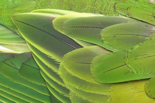Schöner papagei versieht hintergrund mit federn