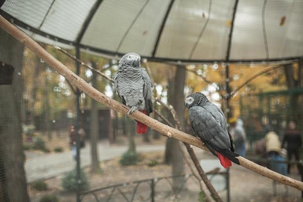Schöner papagei zwei in einem zoo