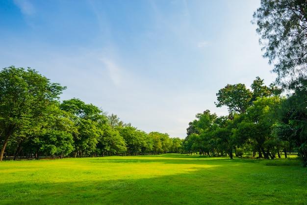 Schöner park der parkszene öffentlich mit grüner rasenfläche