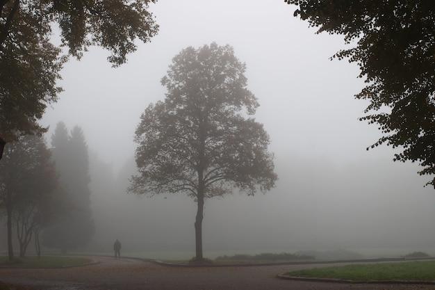 Schöner park im nebel