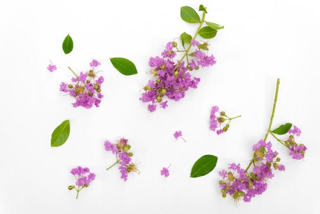 Schöner purpurroter blumenblumenstrauß blüht gesetzt auf weißes holz