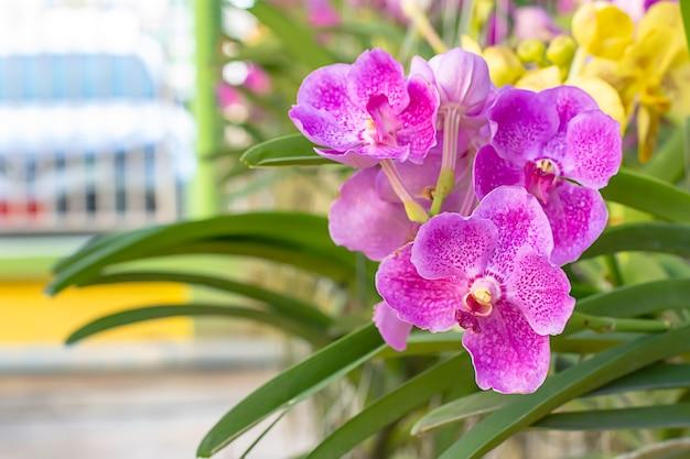 Schöner purpurroter orchideen-hintergrund verwischte blätter im garten.