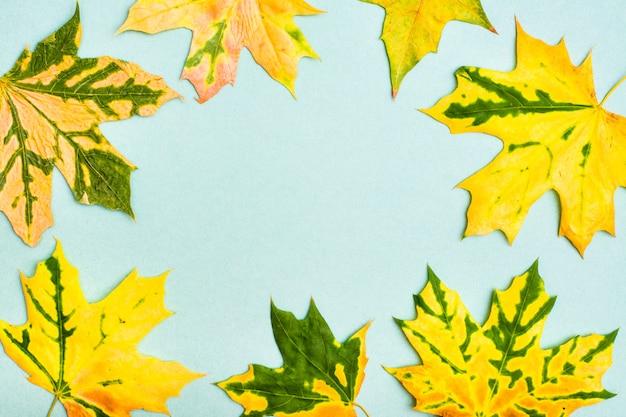 Schöner rahmen von gelbgrün gefallenen ahornblättern auf einer pappe