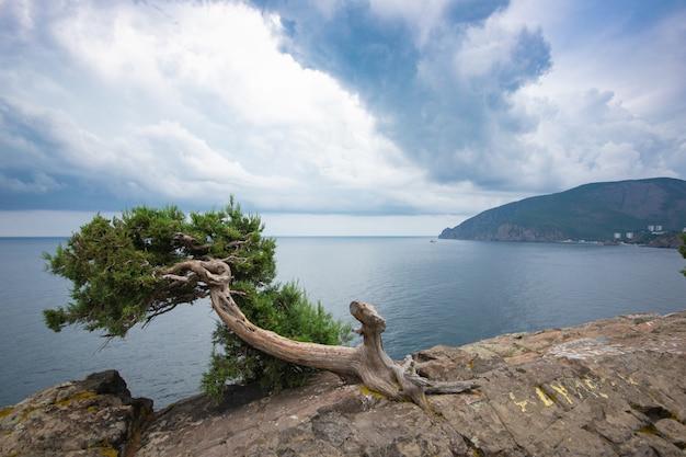 Schöner regen stratus bewölkt sich über den bergen und dem meer. wacholder auf dem felsen. russland, krim.