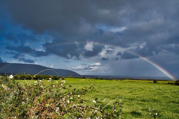 Schöner regenbogen über einem flachen weidenfeld
