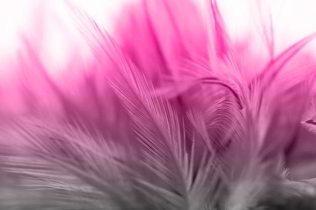Schöner rosa und grauer vintage hühnerfeder textur hintergrund